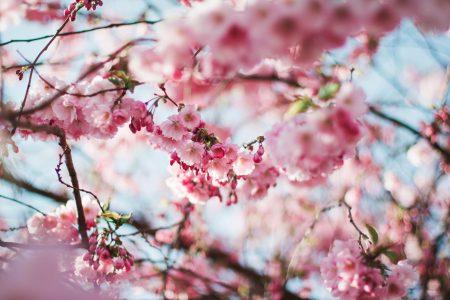 春のキャンペーン開催!